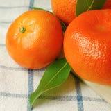 Aranci organici Fotografia Stock