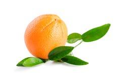 Arancia con le foglie isolate su fondo bianco Immagini Stock Libere da Diritti
