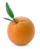 Arancia dell'agrume Fotografia Stock