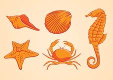 Arancia dell'animale di mare Fotografie Stock Libere da Diritti