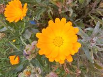 Arancia di Bogota della via del giardino Fotografia Stock
