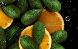 Arancia e foglie illustrazione vettoriale