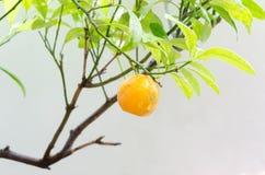 Arancia e goccia di acqua Fotografia Stock