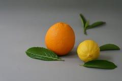 Arancia e limone organici sui precedenti grigi - Fotografia Stock