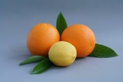 Arancia e limone organici sui precedenti grigi - Fotografia Stock Libera da Diritti