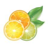 Arancia e limoni realistici Illustrazione Vettoriale