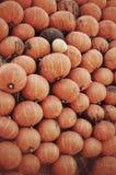 Arancia fresca della zucca del raccolto Fotografie Stock