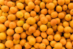 Arancia fresca organica del kumquat Fotografia Stock