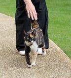 Arancia il gatto di soriano Fotografia Stock