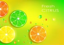 Arancia, limone, limetta e pompelmo Fotografia Stock