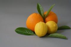 Arancia organica sui precedenti grigi - isolato Immagini Stock