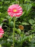 Arancia variopinta di rossi carmini e margherita gialla della gerbera nel giardino con luce naturale di mattina Viaggio nella cit fotografia stock libera da diritti