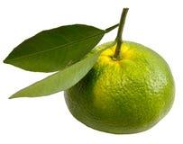 Arancia verde Immagine Stock Libera da Diritti