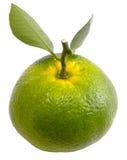 Arancia verde Fotografie Stock Libere da Diritti