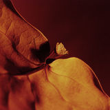 Arancio 02 del foglio Immagine Stock Libera da Diritti