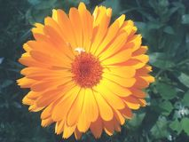 Arancio Fotografie Stock Libere da Diritti