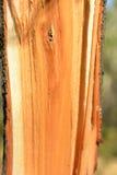 Arancio bianco in un taglio con la corteccia Fotografia Stock Libera da Diritti