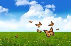 arancio dell'erba del campo delle farfalle Fotografie Stock