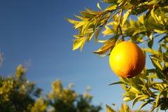 Arancio e spazio fotografie stock libere da diritti