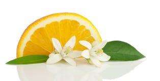 Arancio, fiore e fetta. Fotografie Stock