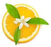 Arancio, fiore e fetta. Immagine Stock Libera da Diritti