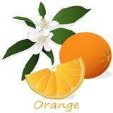 Arancio fresco isolato su priorità bassa bianca immagine stock libera da diritti