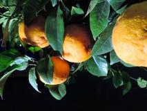 Arancio, illuminato di notte Fotografia Stock