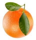 Arancio isolato su una priorità bassa bianca Immagine Stock