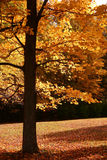 Arancio luminoso fotografie stock