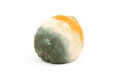 Arancio marcio Moldy Immagini Stock