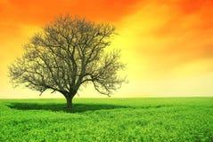 Arancio solo dell'albero Fotografia Stock