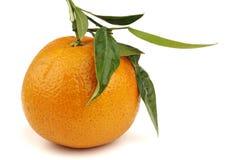 Arancio sopra bianco Immagini Stock