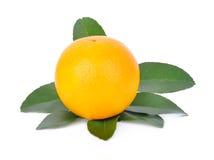 Arancio su priorità bassa bianca Immagine Stock Libera da Diritti
