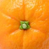 Arancio sugoso maturo fotografia stock libera da diritti