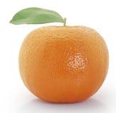 Arancione immagini stock libere da diritti