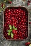 Arandos do norte ou airela da floresta madura fresca, lingonberry em uns copos cerâmicos do tamanho diferente e cor em um cinza Imagens de Stock