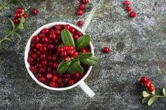 Arandos do norte ou airela da floresta madura fresca, lingonberry em uns copos cerâmicos do tamanho diferente e cor em um cinza Fotos de Stock
