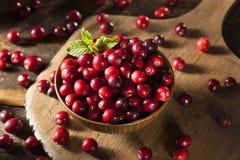 Arandos vermelhos orgânicos crus Fotos de Stock Royalty Free