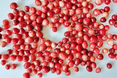 Arandos vermelhos saborosos e saudáveis Foto de Stock