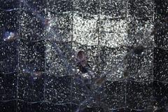 Araneus Стоковые Фотографии RF