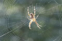 Araneus diadematu. Close-up of a small spider Stock Photo