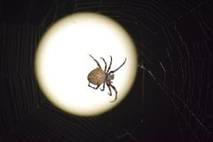 Araneus pająk na tle księżyc Zdjęcia Stock