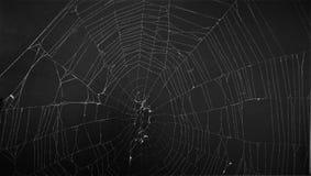 Araneus transversal europeu Diadematus da aranha fotos de stock