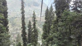 Arang kel wzrost Zdjęcie Royalty Free