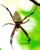 Aranha Imagens de Stock
