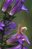 Aranha imagem de stock