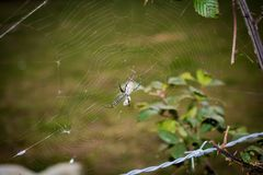 Aranha amarela e preta e Web - 2 imagem de stock