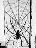 Aranha assustador de Dia das Bruxas na Web foto de stock