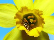 Aranha bonita Fotos de Stock