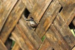 Aranha bonita e triste na teia de aranha Fotos de Stock Royalty Free
